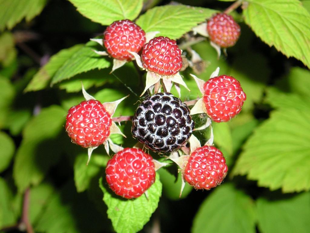 фрукты снижающие холестерин