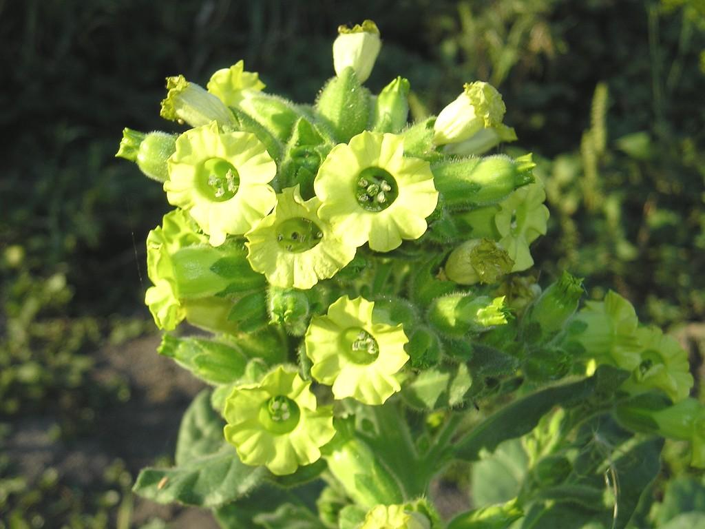 Фото букетов полевых цветов высокого разрешения